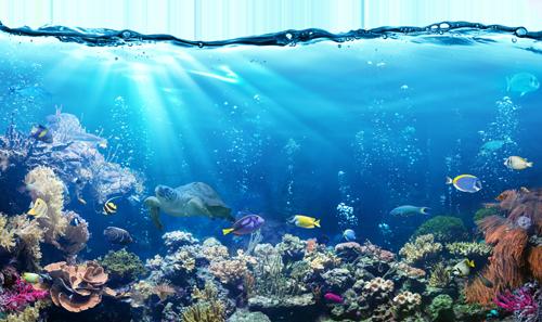 Aquaristik, Gartenteich